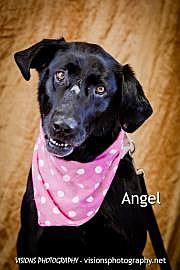 Angel\CVHumane.org