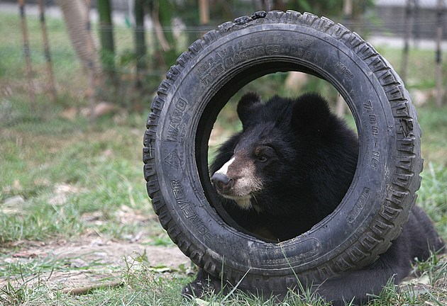 Moon Bear Rescue Centre In Chengdu