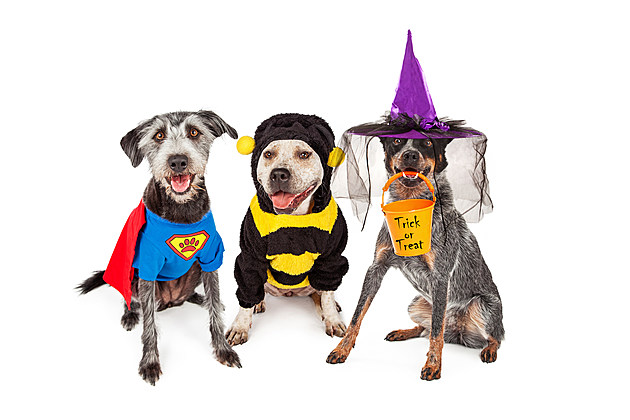 Cute Dogs Wearing Halloween Costumes