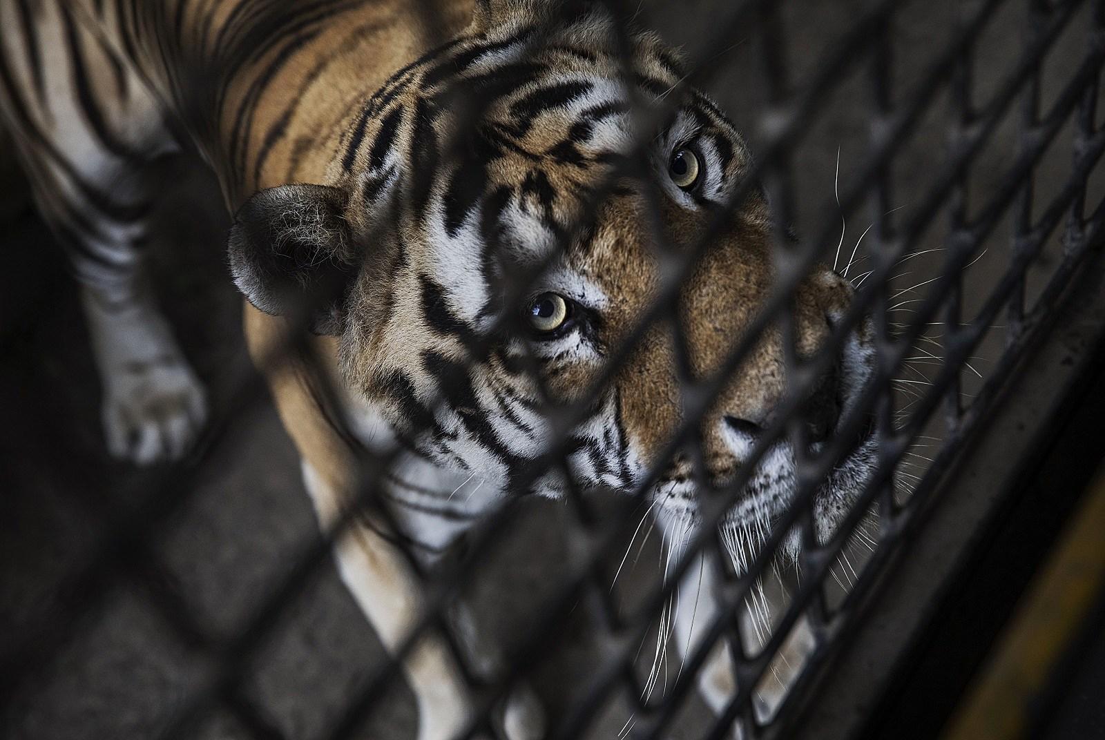 iowa zoo has license revoked